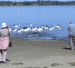 birdwatching-con-gente