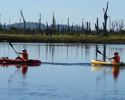 chepu-kayaking-1